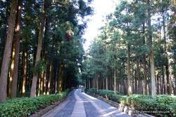 [제주도] 꼭 가볼 곳 - 절물자연휴양림 (추천)