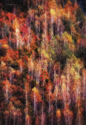 가을...자작나무 숲