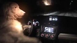 불곰국에선 개가 차를 훔치지만, 러시아(Russia)는 오늘도 평화롭습니다 - 스바루(Subaru)의 바이럴 영상.
