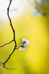 또 다시 봄....