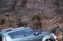 우리동네 - 북한산 아래 멧돼지가 자주 출몰하는 이유..