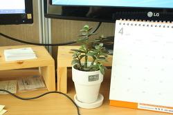 이름모를 다육식물이 사무실에서 잘 자라네요