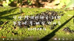 [영상]안양 왕개미제국 29편-꿀물에 푹 빠진 개미들(2019.08.16)