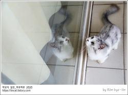 [적묘의 고양이]새벽감성,먼치킨 고양이,짤뱅군의 새벽,월간낚시,파닥파닥