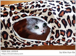 [적묘의 고양이]미묘,6살고양이,터널,고양이 터널, 눈동자만 낚이는 중,친구님네 고양이,먼치킨,짤뱅군