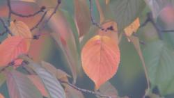 가을,,, Fujinon s44x 7.3 증계카메라용 대포렌즈에 소니 a6000을 마운트