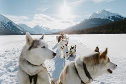 알버타로 떠나는 아름다운 캐나다겨울여행. 보드 타러 가고 싶다!!!