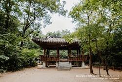 경남 함양 여행 / 고운 최치원 선생이 조성한 천년의 숲 '함양 상림'