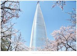 2019 석촌호수 벚꽃축제 현재 벚꽃 개화현황 입니다.
