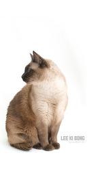 [2017.10.17] 월페이퍼 - 고양이 배경화면