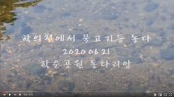 [영상]안양 학의천에서 물고기들 놀다(2020.06.21)