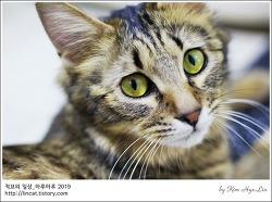 [적묘의 고양이]부산대 공실이, 무사 입양, 무사 출산, 아기냥 5마리,집사급구