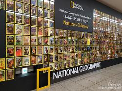 내셔널 지오그래픽과 매그넘 인 파리 사진전을 엘지V50S 씽큐의 다양한 카메라 성능과 함께