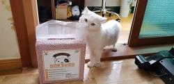 고양이 화장실 모래! 마리펫 두부모래 진짜 괜찮네요! 완전강추!