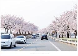 하동 쌍계사 십리벚꽃길 벚꽃축제 흐드러지게 핀 벚꽃길을 달리며ᆢ