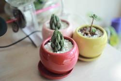 베란다 식물들