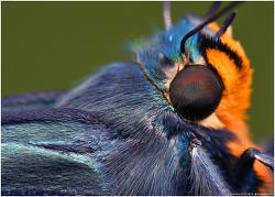 푸른큰수리팔랑나비 들이대 ~~