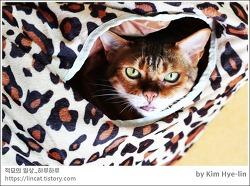 [적묘의 고양이]뱅갈모녀,고양이터널,깔맞춤,무늬맞춤,처서도 지났는데, 폭염