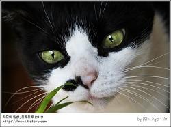 [적묘의 고양이]15살 묘르신,고양이 풀뜯는 소리, 풀을 탐하는 맹수,할묘니,깜찍양의 정원 나들이,여름정원