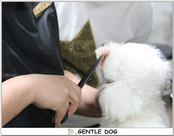 [인천 청라 가위컷 전문 젠틀독] 2019년 '반려견을 위한 셀프미용수업' 안내
