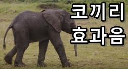 코끼리 울음소리 효과음 mp3 다운로드