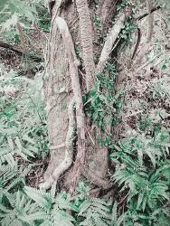 제주도 곶자왈 - 힘들고 긴 시간을 견뎌낸 진짜 나무들
