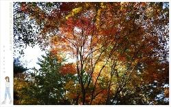 가을 청계산 원터골 산책길에 나서다.