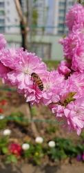봄이 왔어요~~^^