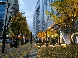 가을이 끝나가는 출근길 아침 풍경