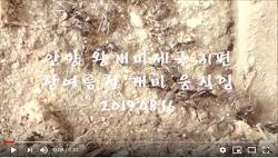 [영상]안양 왕개미제국 31편-여름 폭염속 움직임(2019.08.16)