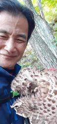 능이버섯 산원초 초심
