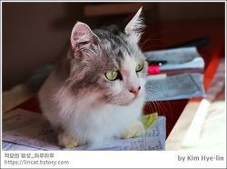 [적묘의 고양이]이시국,코로나,추석은 집콕,방콕,고양이와 함께,채점은 고양이가,추석의 의미는,중간고사