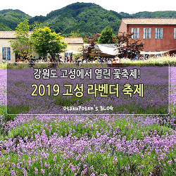 강원도 고성에서 열린 꽃축제! 2019 고성 라벤더 축제