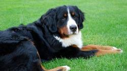 토론토 동물서비스, COVID19로 어려움 겪는 애완동물 주인들 지원