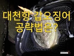 대천항 갑오징어 공략법은?