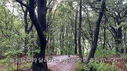 [Trip@Home] 비오는 청계산 걷기