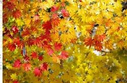 가을이 훅 가기 전에 어디라도