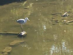 교토 마루야마공원. 사카모토 료마의 기상을 이어받은 새