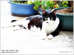 [적묘의 고양이]16살고양이,연꽃,녹아내리는 할묘니,노묘,녹는 고양이,철푸덕