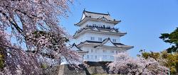 오다와라성과 벚꽃 사진 명당