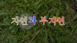 자연과 부자연 [포토포엠 - 설산]