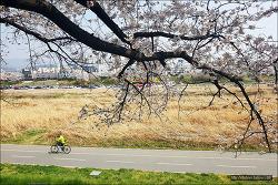 <청주> 2019년 4월5일 무심천 벚꽃 구경오세요