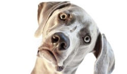 개가 머리를 옆으로 기울이는 이유는 무엇일까?