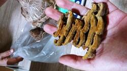 버섯감정 들어온 사진