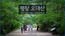[강원 평창여행] 오대산 순녹의 숨결 - 월정사, 상원사, 켄싱턴호텔 평창 정원 /하늘연못