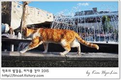 [적묘의 터키]이스탄불 고양이, 예니자미 뒤쪽,이슬람 사원, 꽃시장과 애완동물시장