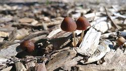 버섯 가족