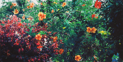Flowers *93cm x 47cm C-Print(Ed. 159/250) *액자없음* - 배병우