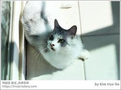 [적묘의 고양이]6살고양이,가을햇살, 먼치킨,짤뱅군이 피곤한 이유,친구님네고양이