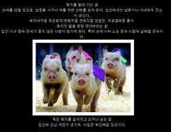 새해 설날 꿈을 꾸었는데,,,,돼지 사채 시체 들이 널려 있네요.
